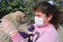 YAVRU KÖPEK - Öğrenciler Yavru Köpekleri Doyasıya Sevdi