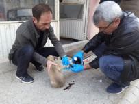 KÖPEK YAVRUSU - Otomobilin Çarptığı Köpek Yavrusu Tedavi Altına Alındı