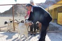 TAŞ OCAĞI - Seydişehir'de Hayvan Barınağı Hizmette