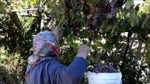 Şifa Kaynağı Üzüm Hünerli Ellerde 'Pelte'ye Dönüşüyor