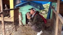 HAYVAN BARINAĞI - Sokak Hayvanlarını Hayatına 'Ortak' Ediyor