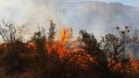 ÇINAR AĞACI - Bahçe Yangınında Bir Çok Ağaç Zarar Gördü
