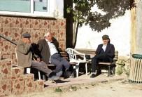Bursa'da Ayılar 11 İneği Parçalayıp Toprağa Gömdü