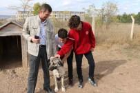 CÜ Vakfı Okulları Öğrencileri Hayvanları Unutmadı