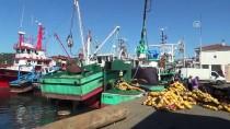 GıRGıR - Karadeniz'de Palamut Bolluğu Balıkçıların Yüzünü Güldürdü