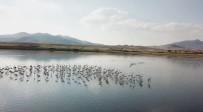 Karataş Ve Çorak Göldeki Su Kuşları Havadan Görüntülendi