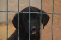 KASTAMONU ÜNIVERSITESI - Kastamonu Belediyesi Sokak Hayvanlarını Unutmuyor