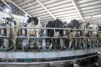 KURBAN BAYRAMı - Kendirlioğlu; 'Süt Fiyatları Arasındaki Dengesizliğe Müdahale Edilmelidir'