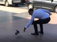 MUSTAFA HAKAN GÜVENÇER - Manisa Valiliği Önünde Kedi Seferberliği