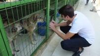 HAYVAN BARINAĞI - Öğrenciler Harçlıkları İle Köpeklere Mama Aldı Kulübe Yaptırdı