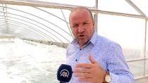 Ünlü İngiliz Futbol Kulübü Arsenal, Kırıkkale'den Tuz İstedi