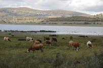 GÖLLER - 870 Hektarlık Ladik Gölü Kuruma Tehlikesiyle Karşı Karşıya