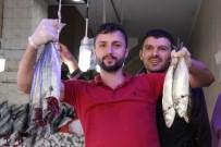 1 EYLÜL - Samsun'da Palamudun Ardından 'Lüfer' Patladı