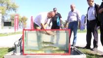 SAPANCA GÖLÜ - Ulusal Turna Balığı Tutma Yarışması
