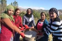 KURU FASULYE - Bingöl'de Horoz Kuru Fasulyesinin Coğrafi İşaret Başvurusu İçin Hasadı Yapıldı