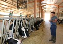 Devlet Destekli Kurulan Hayvan Çiftliği Büyümeye Devam Ediyor