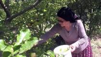 İbrahim Bayrak - Elmaları Değerlendirmek İçin Başladı Şimdi Türkiye'ye Satıyor