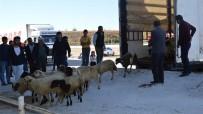 Kırıkkale'de 135 Genç Çiftçiye Canlı Hayvan Desteği