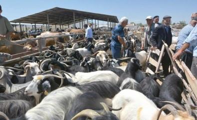 Sungurlu Hayvan Pazarı 11 Ekim'de Açılıyor