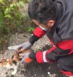 İTFAİYE MERDİVENİ - Ağaçta Mahsur Kalan Kedi İçin Seferber Oldular