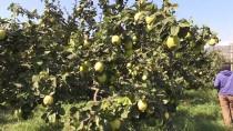 İRFAN BALKANLıOĞLU - Sebze-Meyve 'Evinde' Paketlenecek