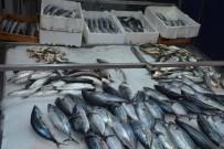 GıRGıR - Sinop'ta Palamut 5 Lira