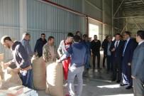 HARUN SARıFAKıOĞULLARı - Giresun'da TMO Fındık Alımlarına Başladı