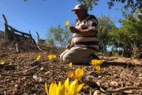 Yok Olmaya Yüz Tutan Çiğdemleri Bahçesinde Yetiştirip Doğada Ekiyor