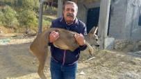AMANOS DAĞLARI - Amanos Dağları'nda Köpeklerin Kovaladığı Karaca Gazeteciye Sığındı