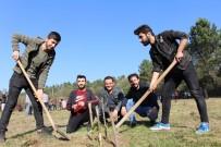KREDI VE YURTLAR KURUMU - Düzce'de KYK Öğrencileri Fidan Dikti
