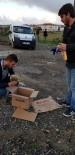 Kaynarca'da Yaralı Peçeli Baykuş Bulundu