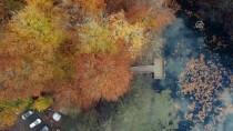Tabiatın Kalbinde Sonbahar Güzelliği
