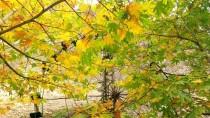 ZİYARETÇİLER - Tohma Kanyonu Sonbaharda Başka Güzel