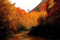 PORSUK - Türkiye'nin En Büyük Blok Ormanlarını Barından Yenice'de Sonbahar Güzelliği