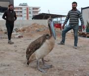 Yorgun Düşen Pelikana İnşaat İşçileri Sahip Çıktı