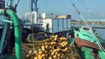 UMUTLU - Balıkçılar Bu Kez Hamsi İçin 'Vira Bismillah' Dedi