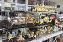 Güneydoğu'nun En Büyük Kafes Kuşları Organizasyonu
