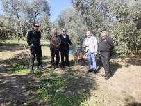 FAIK OKTAY SÖZER - Kaymakam Zeytin Ağacına Çıkıp Rekolte Kontrolü Yaptı