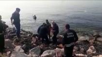 Köpeklerden Kaçarken Denize Atlayan Ceylan Kurtarıldı