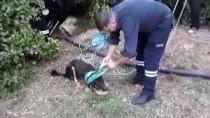 KÖPEK YAVRUSU - Kuyuya Düşen Yavru Köpekleri İtfaiye Kurtardı