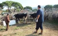 Üç Mahallede 'Kuduz' Karantinası