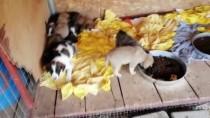 YAVRU KÖPEK - Yavru Köpekleri Çuvala Koyup Bakımevi Kapısına Bıraktılar