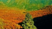 PORSUK - Yenice Ormanlarında Sonbahar Güzelliği