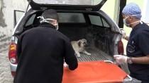 Ayakları Tutmayan Köpek Tedavi Altına Alındı