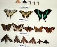 Böcek Müzesi Dikkat Çekiyor