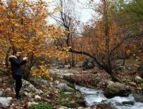 AMANOS DAĞLARI - Doğu Akdeniz'de sonbahar renkleri
