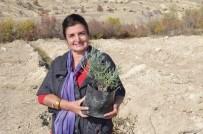 GİRİŞİMCİLİK - Girişimci Kadın, Köyünü Gül Ve Lavanta Gibi Yapacak