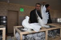 Güvercin Severler Kızıltepe'de Buluştu