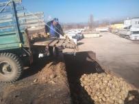 Hisarcık'ta 500 Ton Şeker Pancarı Üretildi