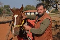 Kamçıyla Vurulan Atın Sahibi, Ata Vuran Çalışanını İşten Çıkardı